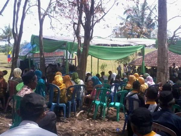 Acara panen raya yang melibatkan petani dan BATAN-DIPERTA Sumedang (foto oleh Apeng Ropendi)
