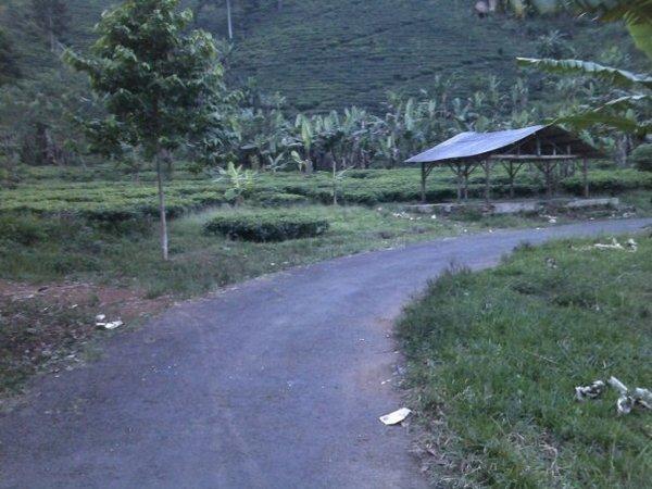 Salah satu ruas jalan yang menjadi akses ke perkebunan teh Margawindu