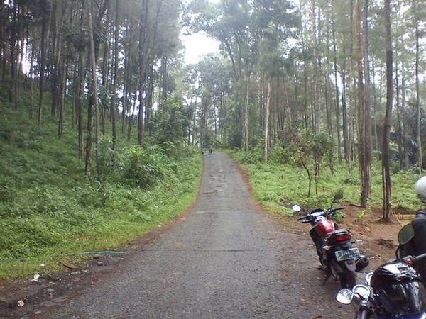 Salah satu akses jalan di Desa Buana Mekar (foto: Pinterest didin hasanudin)