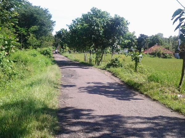 Salah satu akses jalan di Desa Suriamedal
