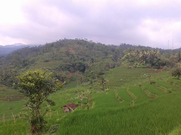 Alam Desa Sukamukti (foto: internet)