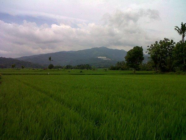 Areapesawahan di Desa Cijati (foto oleh Muhammad Dedy)