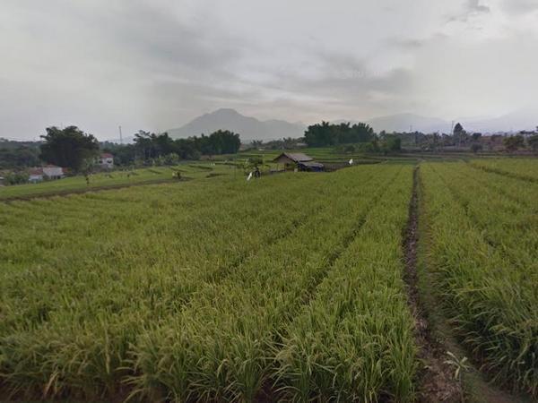 Area pesawahan Desa Gudang (foto: Google Street View)