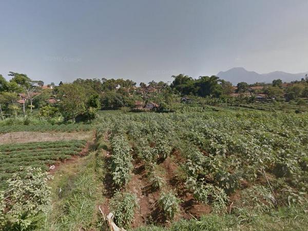 Areal pertanian di Desa Citali (foto: Google)