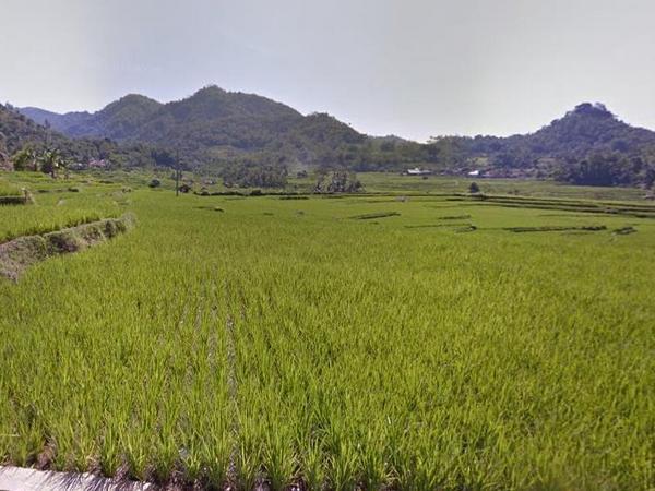 Areal pesawahan (foto: Google Street View)
