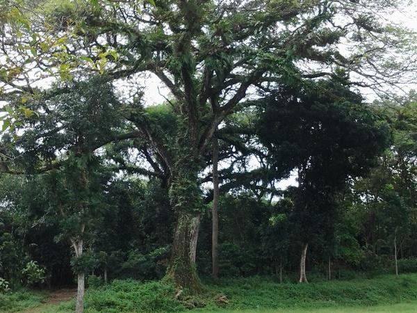 Di bawah rinduhnya pepohonan ini Situs Cadas Ngampar berada