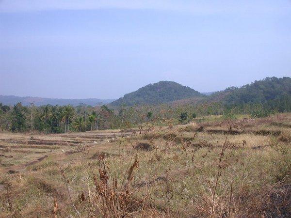 Gunung Surian dilihat dari pesawahan Desa Jemah (foto: Panoramio Dens Sahman)