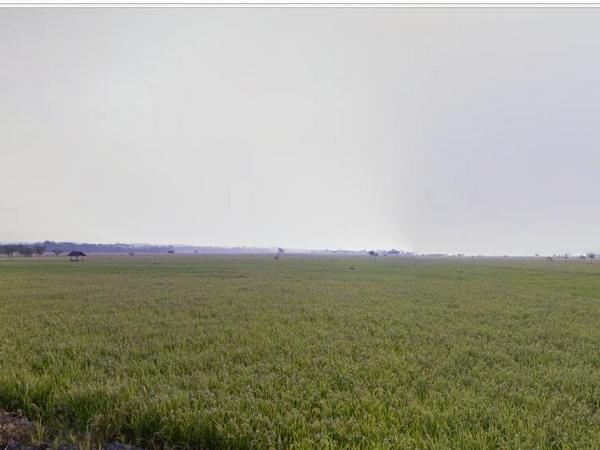 Hamparan pesawahan (foto: Google Street View)