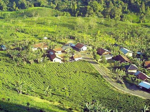 Kampung Cisoka, di tengah perkebunan teh Margawindu
