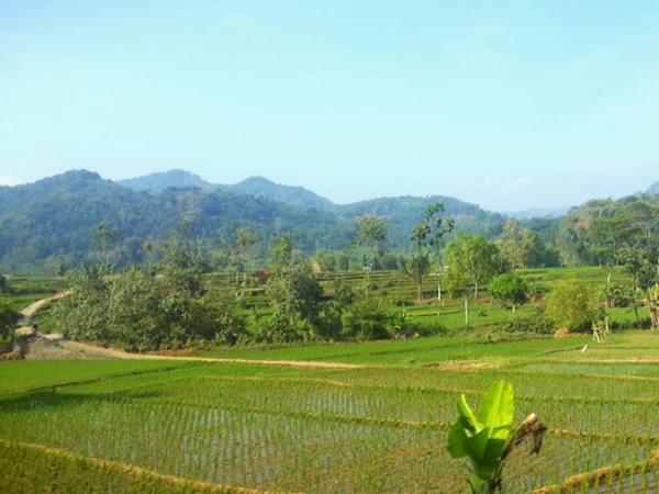 Salah satu kawasan di Desa Cisurat (foto oleh Ochid Bandar Kusen)