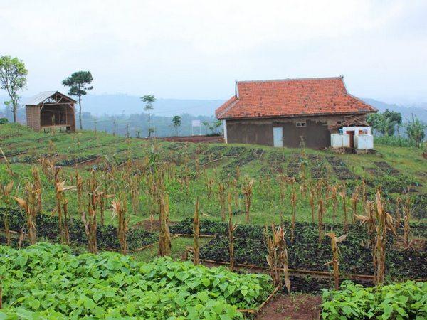 Kawasan pertanian (foto: facebook Desa Pasirnanjung)