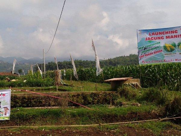 Kawasan pertanian (foto: facebook)
