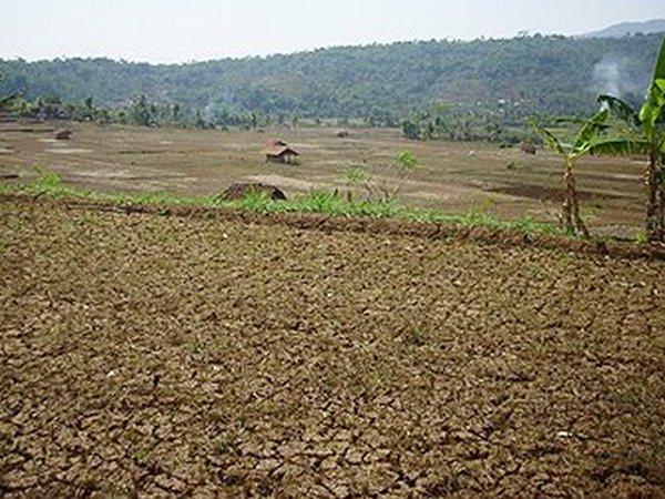 Kekeringan di lahan pesawahan akibat saluran irigasi longsor (foto: Media Nurani Sumedang)