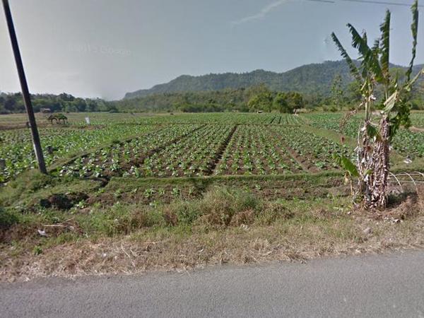 Lahan pertanian di Desa Mekarwangi (foto: Google Street View)