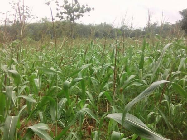 Lahan pertanian (foto: facebook)