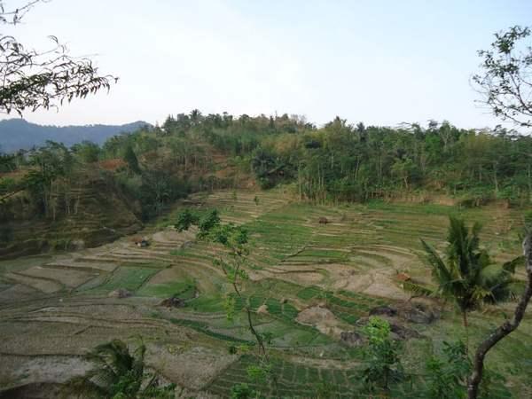 Lahan pertanian di Desa Cibuluh (foto: KKNM Unpad)