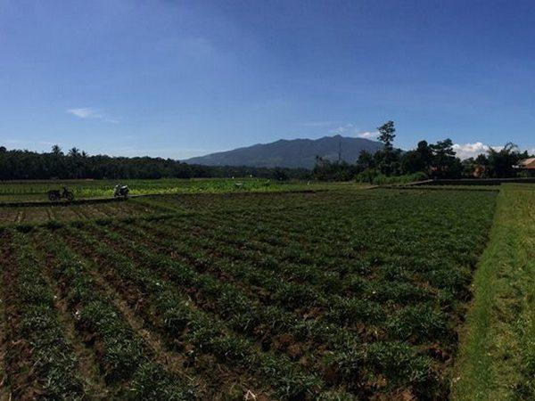 Lahan pertanian Desa Cinanjung (foto: facebook Eko Okta Jumari II)