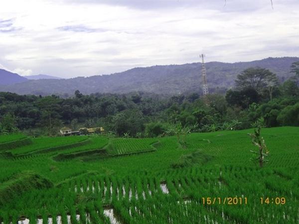 Panorama alam lahan pertanian di Desa Banyuasih (foto: KKNM Unpad Banyuasih)