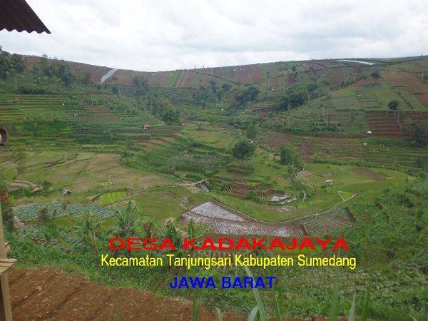 Lahan pertanian di Desa Kdakajaya (foto: facebook Desa Kadakajaya)