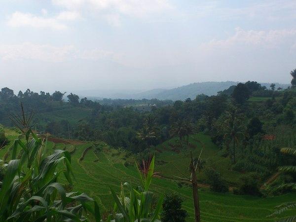 Lahan pertanian Desa Jayamekar (foto: KKNM Unpad)