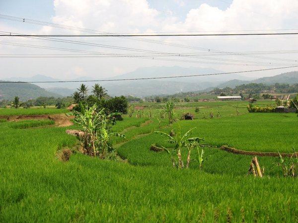 Lahan pesawahan (foto: Panoramio Yohanes Yuli)
