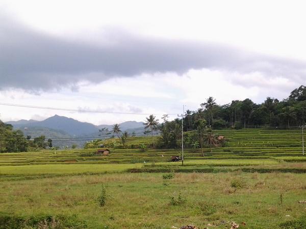 Lahan pesawahan di Desa Padasuka