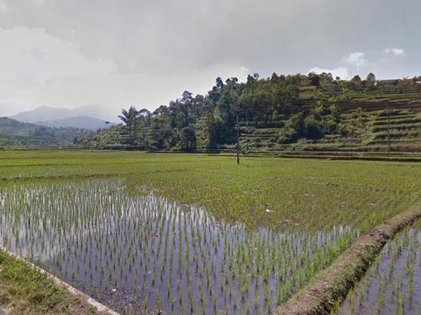 Lahan pesawahan (foto: Google Street View)