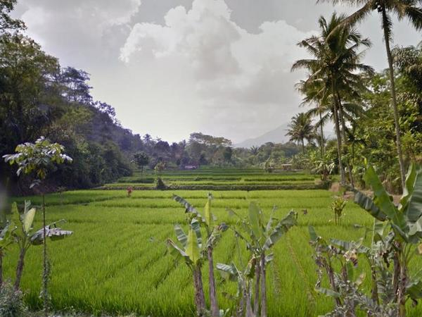 Lahan pesawahan Desa Jatimulya (foto: Google Street View)