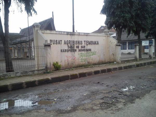 Pusat Agrobisnis Tembakau (PAT) Tanjungsari (Foto oleh Soni Suherman)