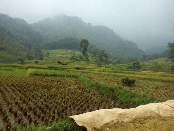 Panorama pesawahan di Desa Buana Mekar (foto: Pinterest didin hasanudin)