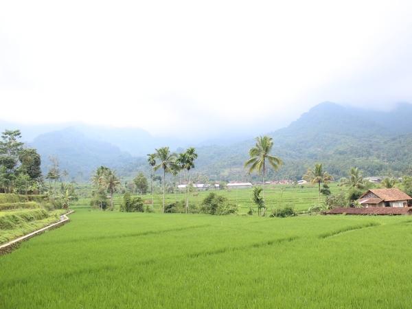 Panorama alam pesawahan Desa Cikaramas (foto: KKNM Unpad)