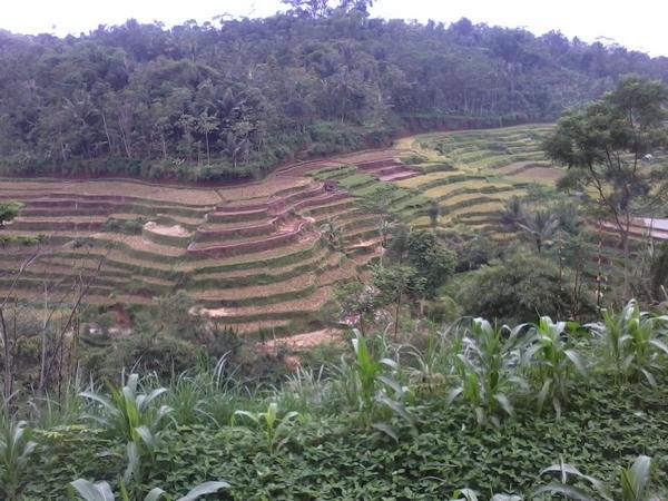 Panorama alam Desa Pamekaran (foto: KKNM Unpad)