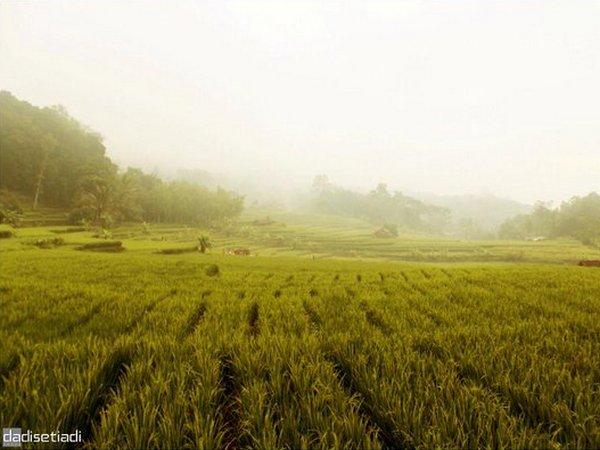 Panorama alam Desa Girimukti (foto: twitter @dadisetiadi)