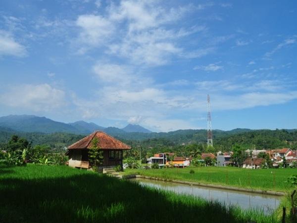 Panorama pesawahan (foto: KKNM Unpad)