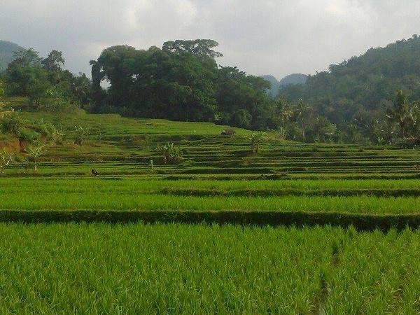 Panorama alam pesawahan di Desa Sundamekar (foto: facebook Desa Sundamekar)