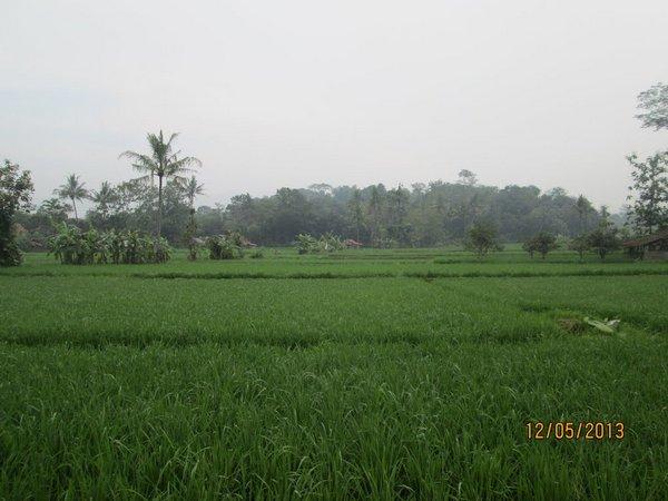 Panorama alam pesawahan di Desa Paku Alam (foto: panoramio/asp30)