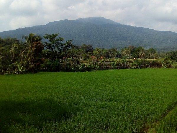 Panorama alam pesawahan (foto: facebook Negrak Desa Nagrak)