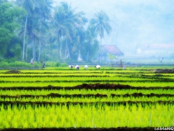 Panorama pesawahan di Desa Cibitung (foto: KKNM Unpad Cibitung)