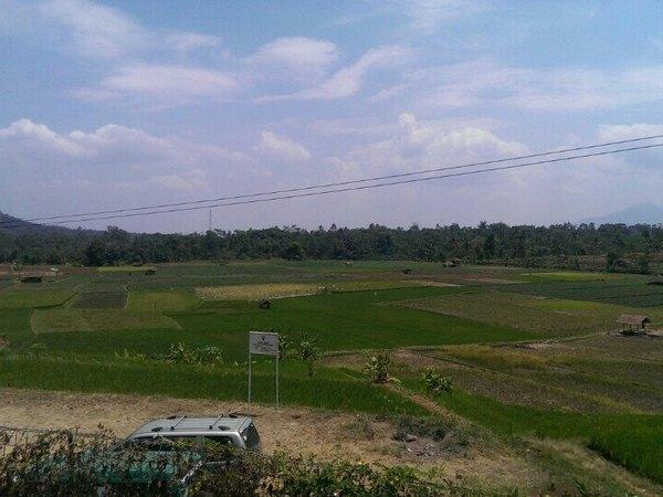 Panorama pesawahan (foto: Foursquare)