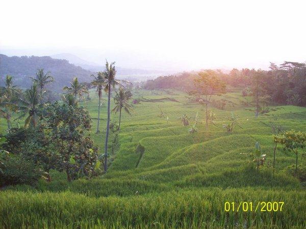 Panorama pesawahan (foto: Panoramio)