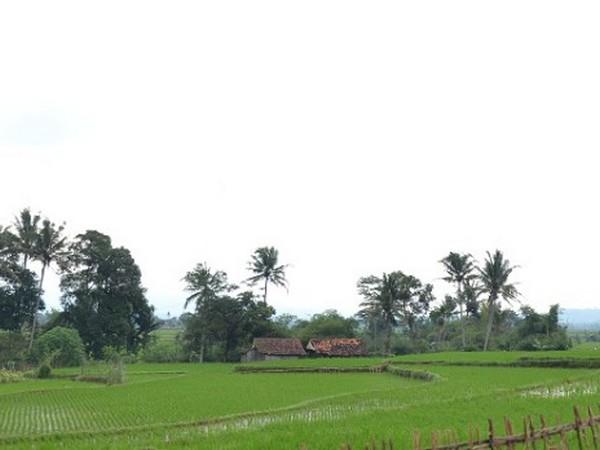 Pemandangan alam Cisitu (foto: KKNM Unpad Cisitu)