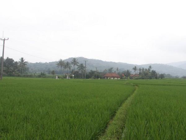 Pemandangan alam Desa Cigintung (foto: KKNM Unpad)