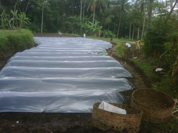 Proses pembibitan bambu di Desa Mekarasih