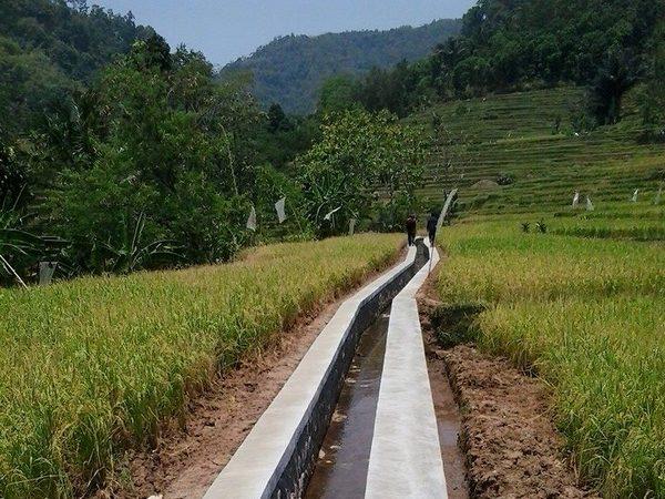 Lahan pesawahan Ranggon (foto: facebook)