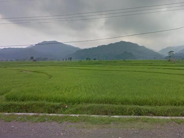 Pesawahan di Desa Cieunteung (foto: Google Street View)