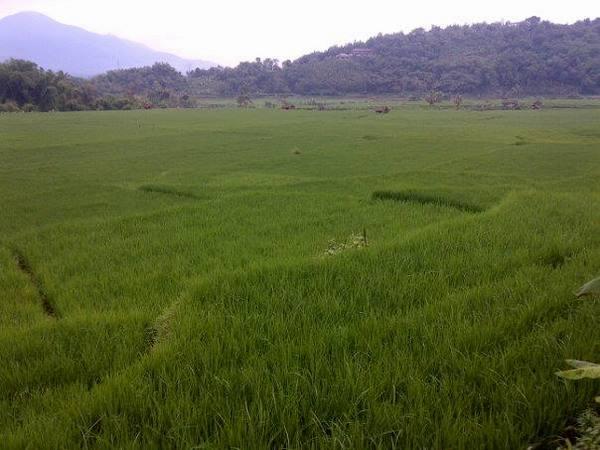 Panorama pesawahan Cipameungpeuk (foto: facebook Mujirah Sumedang)