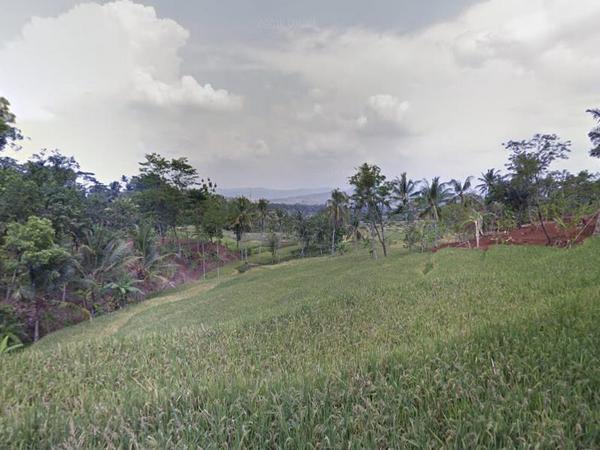 Pesawahan Desa Darmajaya (foto: Google Street View)