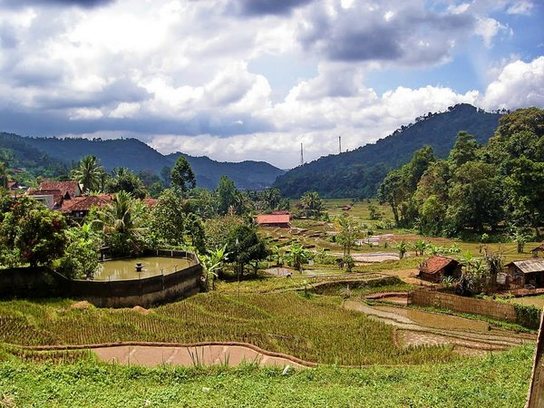 Pesawahan di Desa Cipancar (foto: Panoramio Jana Arif Jauhari)