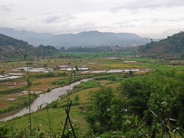 Pesawahan di Desa Gunasari (foto: pribadi)
