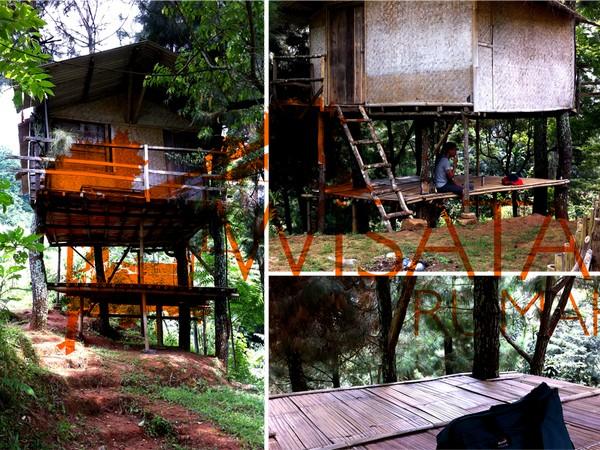 Rumah pohon di Nangorak